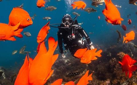 Scubadomain Advanced Diver
