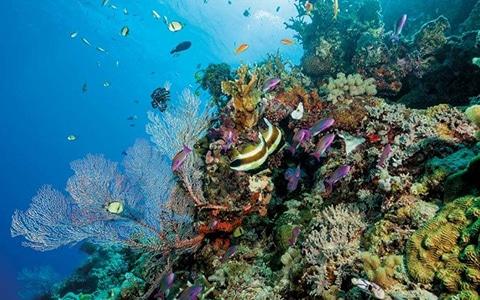 Scubadomain Great Barrier Reef